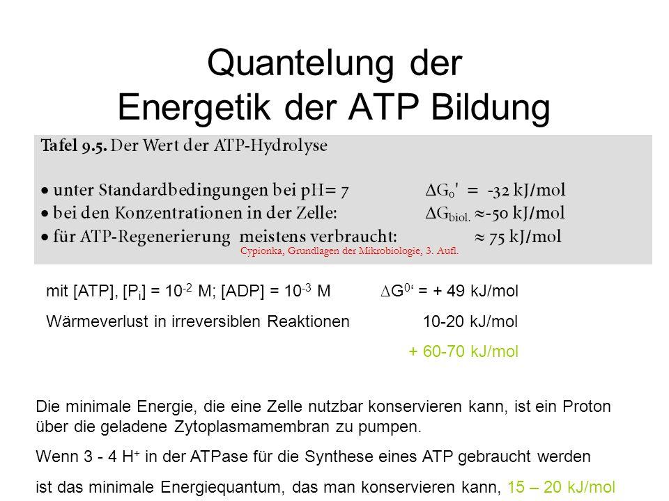 Quantelung der Energetik der ATP Bildung