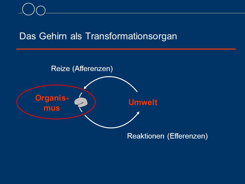 Das Gehirn als Transformationsorgan