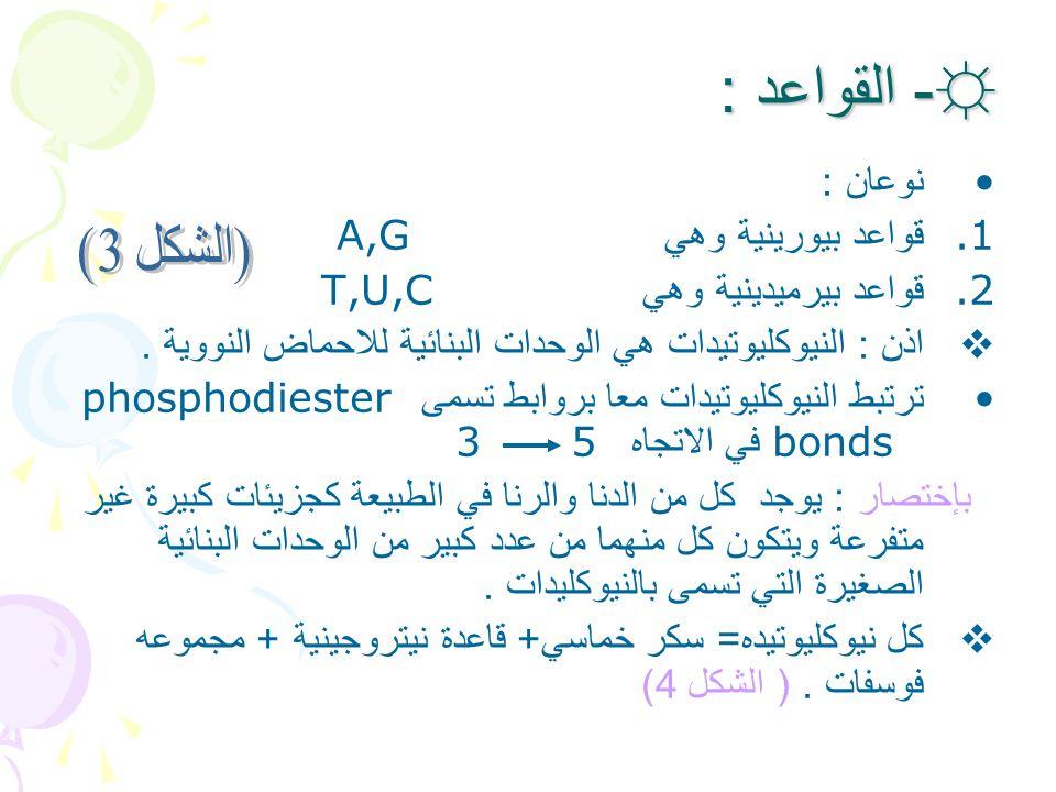 - القواعد : نوعان : قواعد بيورينية وهي A,G قواعد بيرميدينية وهي T,U,C