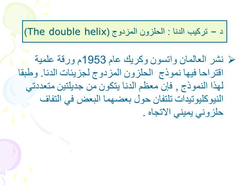 د – تركيب الدنا : الحلزون المزدوج (The double helix)