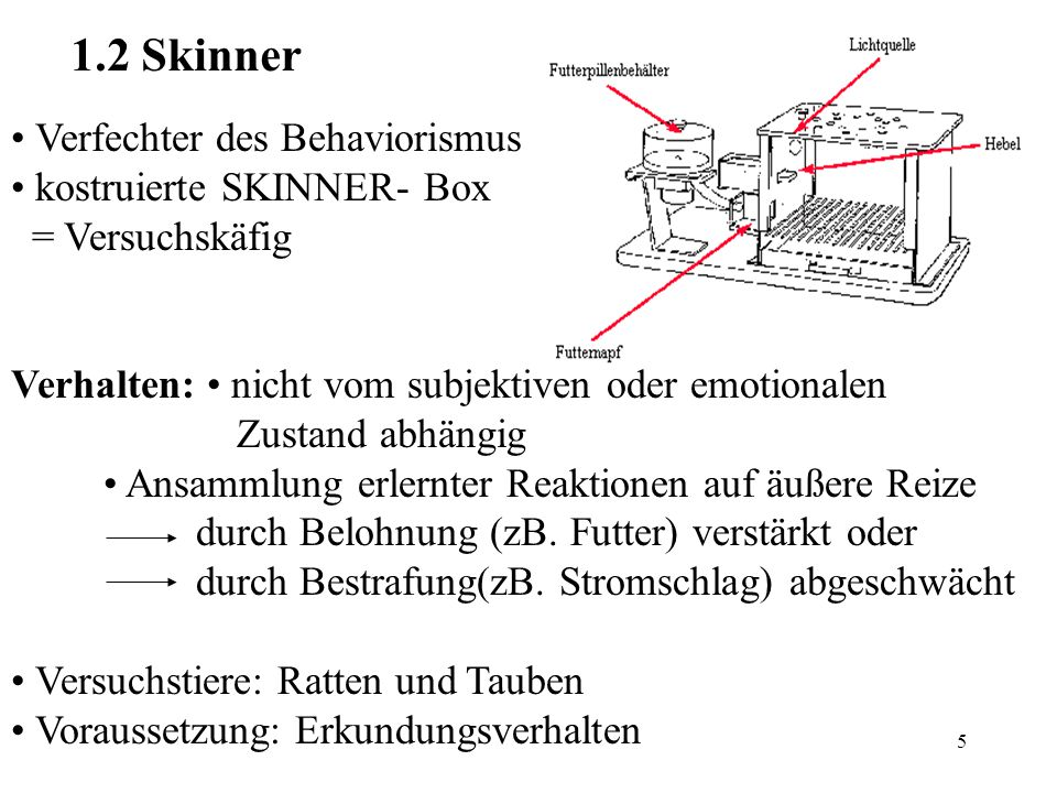 1.2 Skinner • Verfechter des Behaviorismus • kostruierte SKINNER- Box