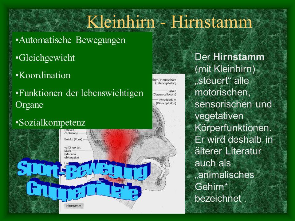 Kleinhirn - Hirnstamm Sport - Bewegung Gruppenrituale