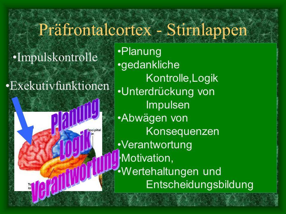 Präfrontalcortex - Stirnlappen