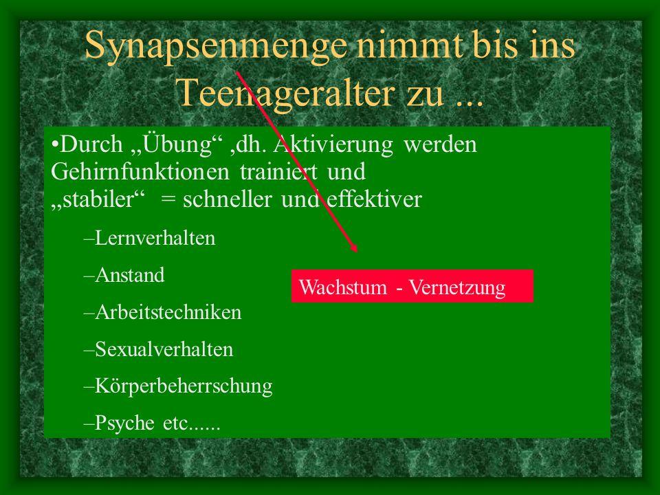 Synapsenmenge nimmt bis ins Teenageralter zu ...