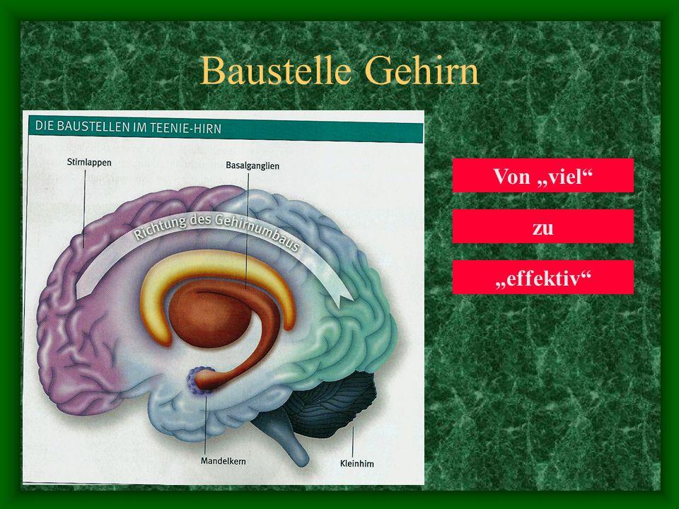 """Baustelle Gehirn Von """"viel zu """"effektiv"""