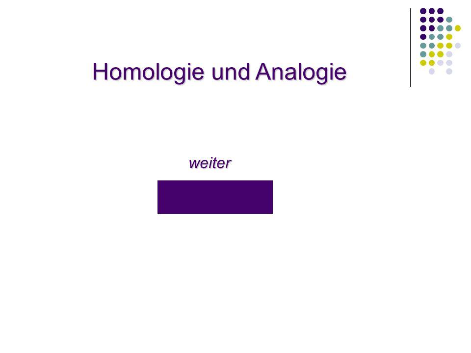 Homologie und Analogie