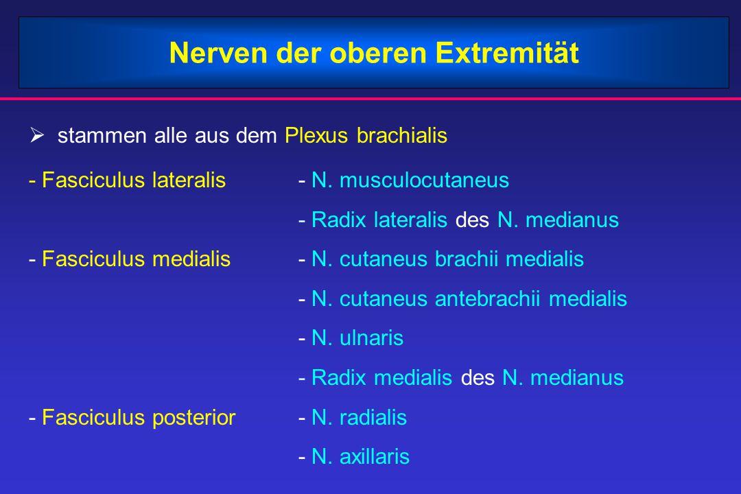 Nerven der oberen Extremität