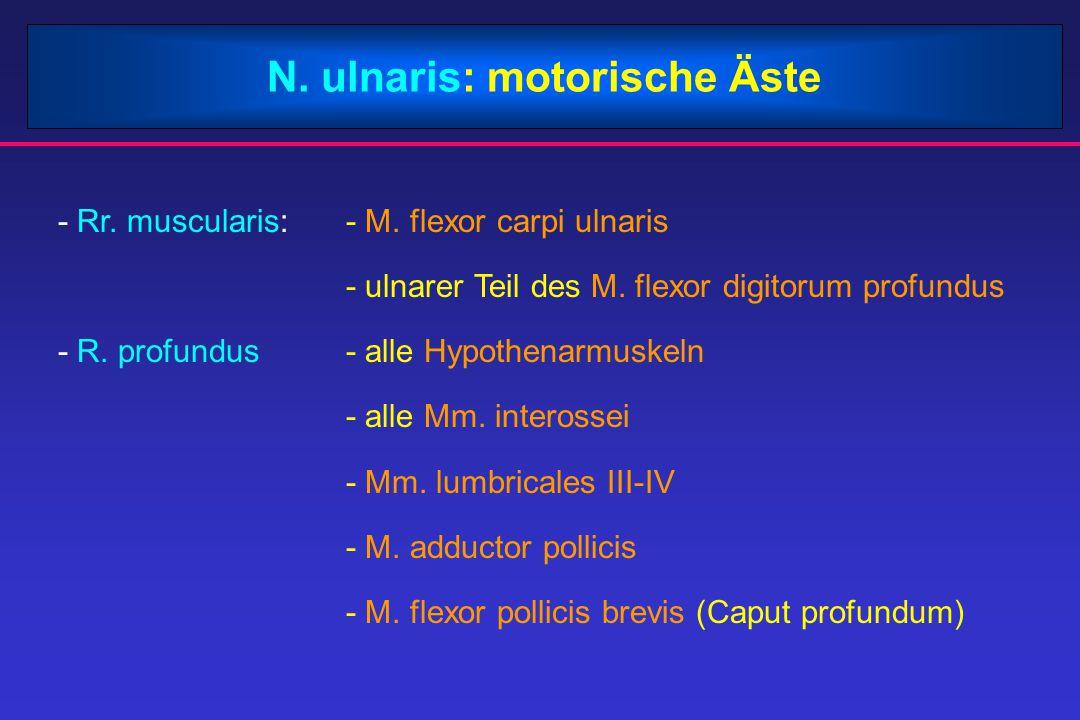 N. ulnaris: motorische Äste