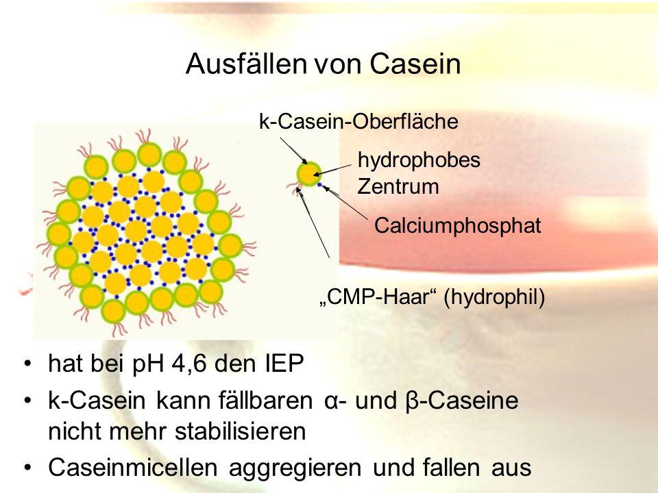 Ausfällen von Casein hat bei pH 4,6 den IEP