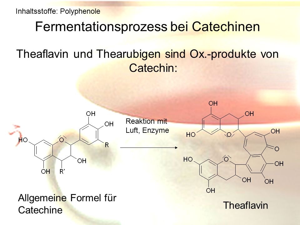 Fermentationsprozess bei Catechinen