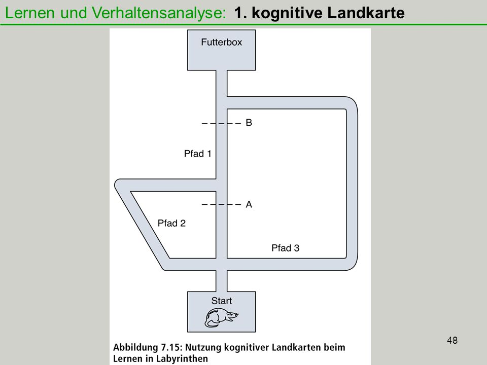 Lernen und Verhaltensanalyse: 1. kognitive Landkarte