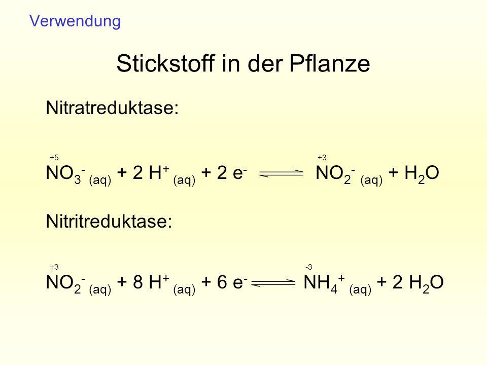 Stickstoff in der Pflanze