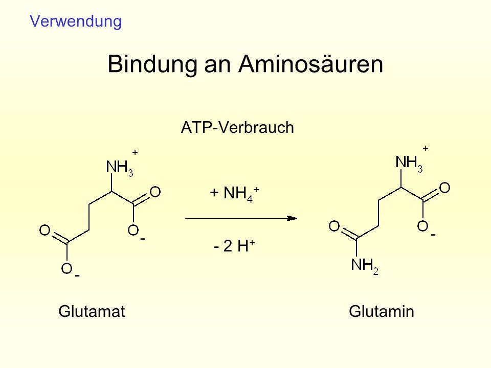 Bindung an Aminosäuren