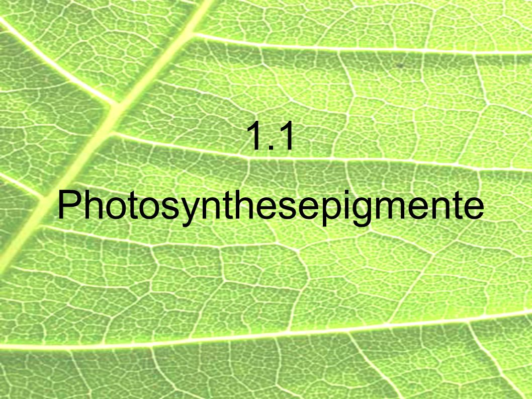 1.1 Photosynthesepigmente