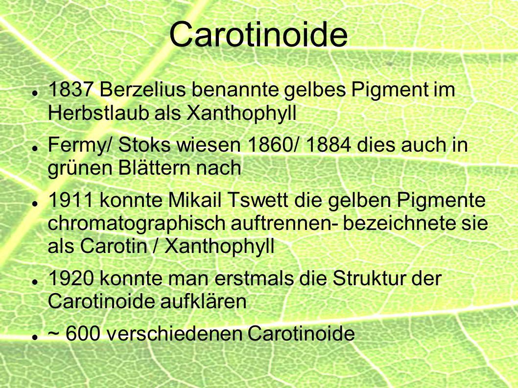 Carotinoide 1837 Berzelius benannte gelbes Pigment im Herbstlaub als Xanthophyll. Fermy/ Stoks wiesen 1860/ 1884 dies auch in grünen Blättern nach.