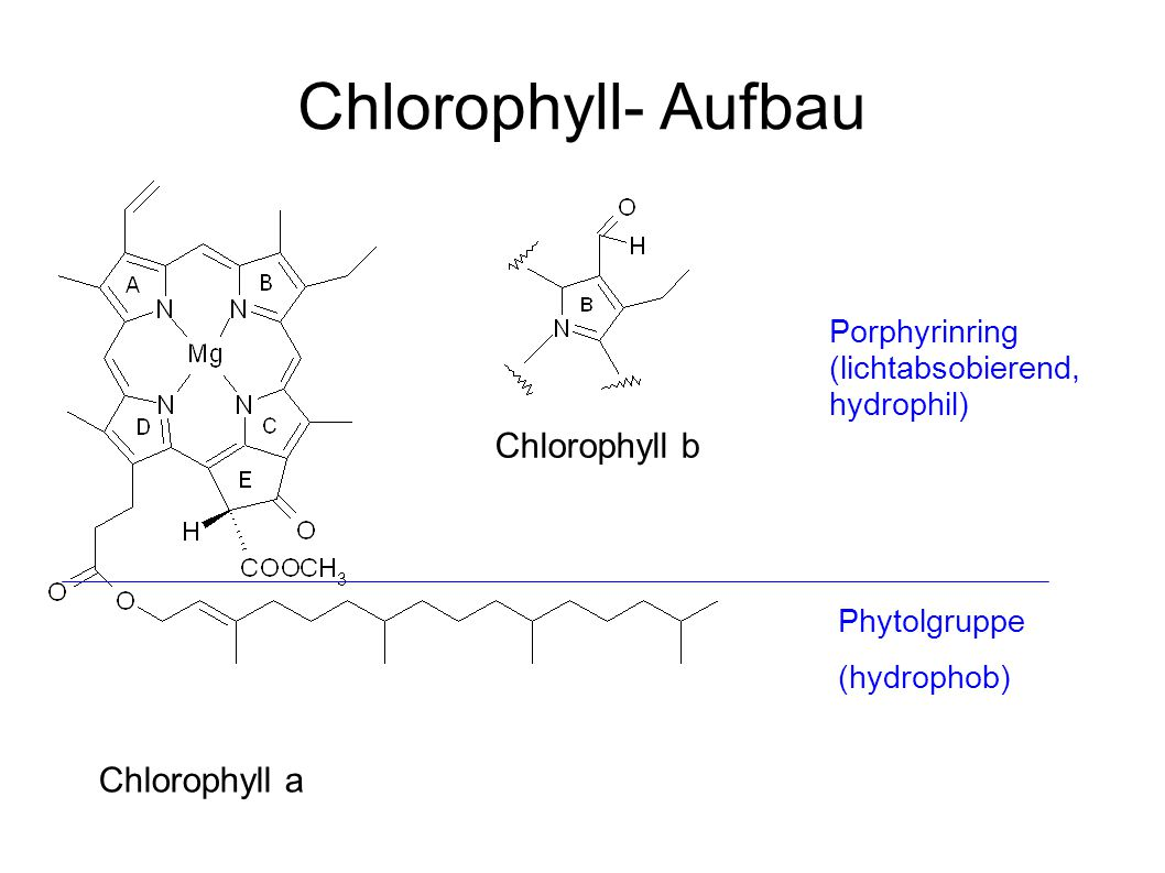 Chlorophyll- Aufbau Chlorophyll b Chlorophyll a Porphyrinring