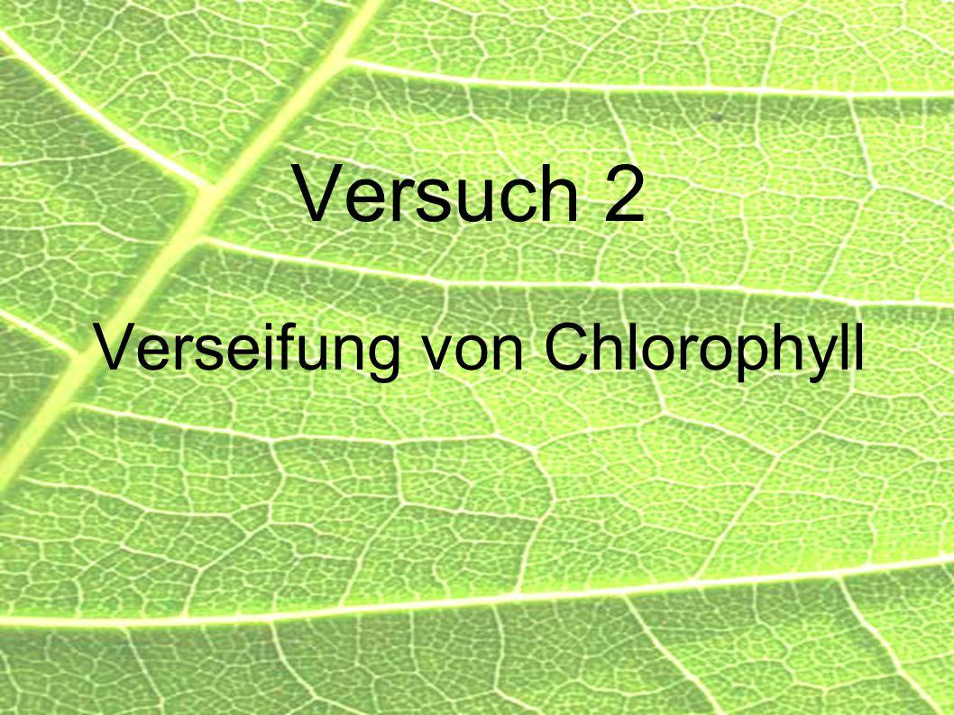 Verseifung von Chlorophyll