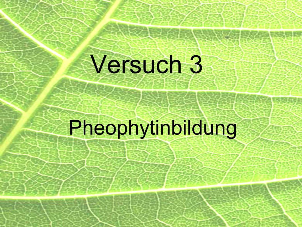 Versuch 3 Pheophytinbildung