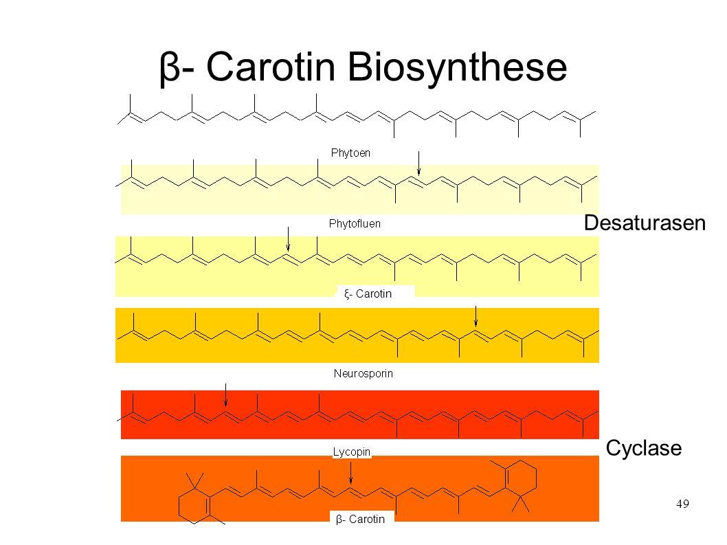 β- Carotin Biosynthese