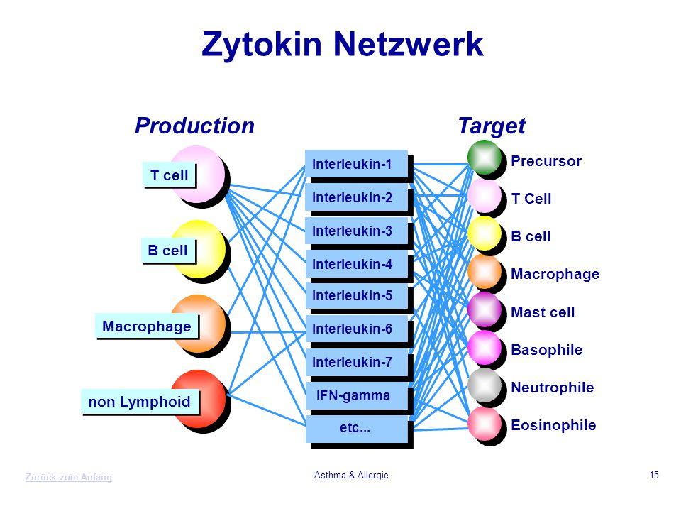 Zytokin Netzwerk Production Target Precursor T cell T Cell B cell