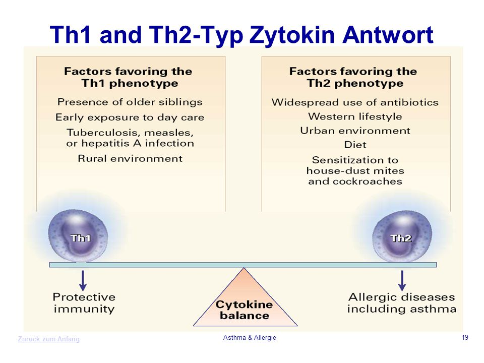 Th1 and Th2-Typ Zytokin Antwort