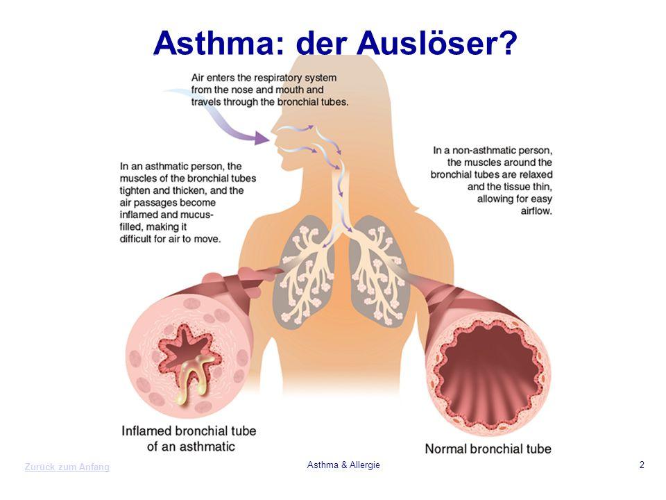 Asthma: der Auslöser Asthma & Allergie