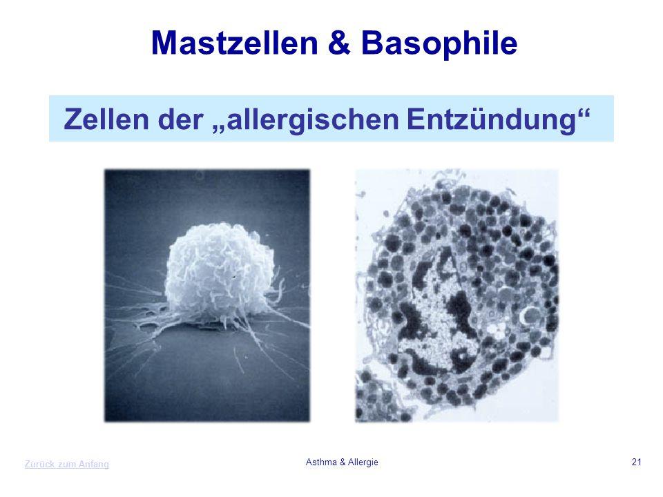 Mastzellen & Basophile