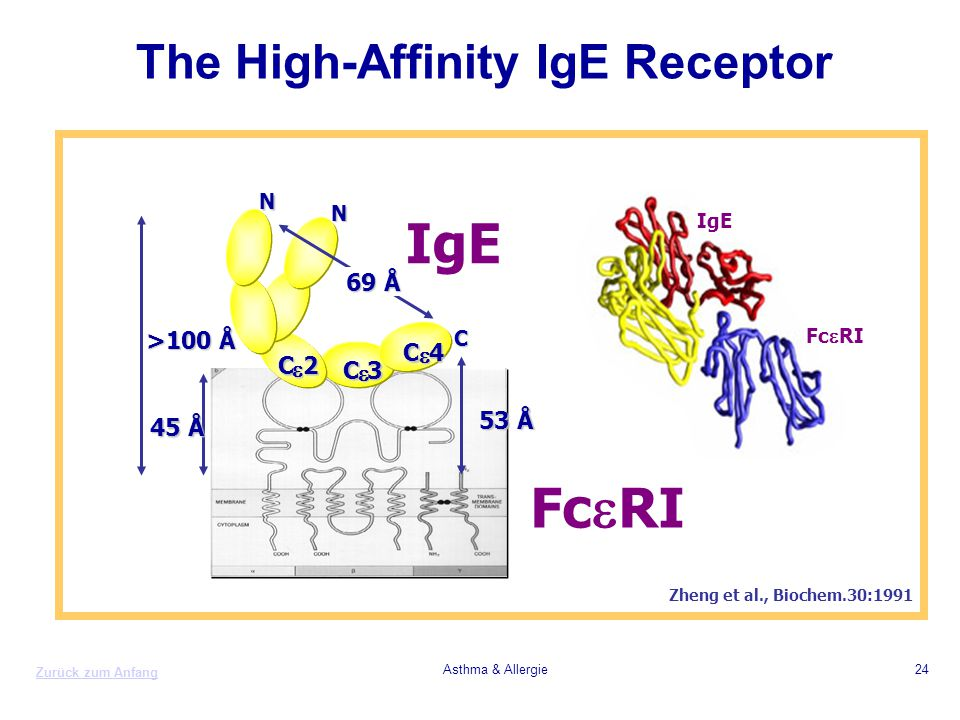 The High-Affinity IgE Receptor