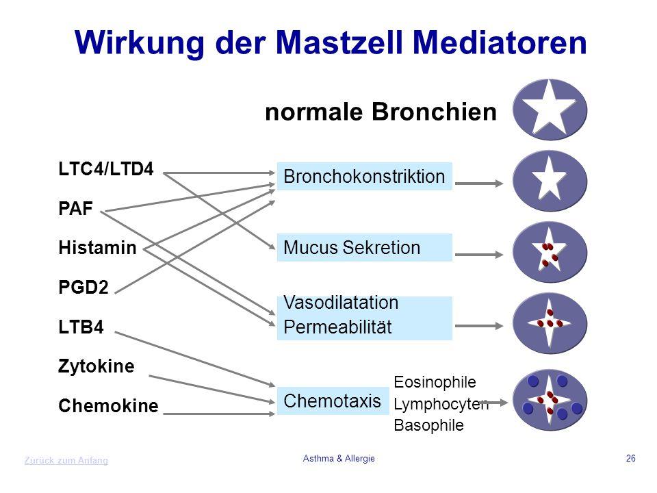 Wirkung der Mastzell Mediatoren
