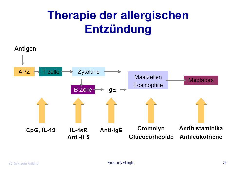 Therapie der allergischen Entzündung
