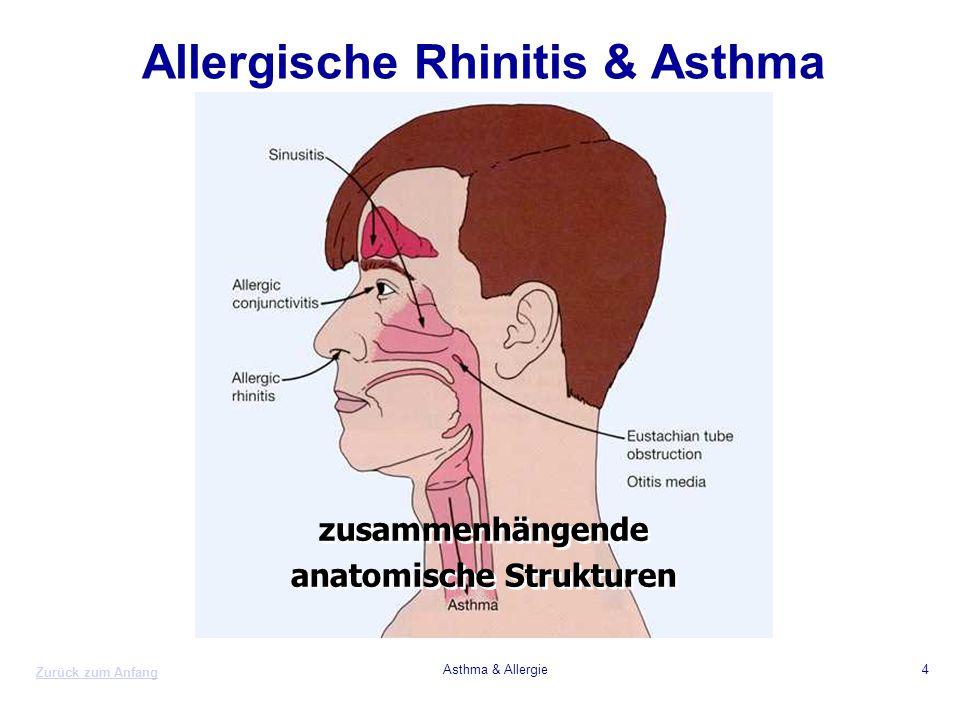 Allergische Rhinitis & Asthma