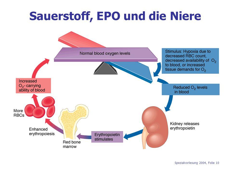 Sauerstoff, EPO und die Niere