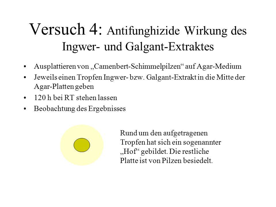 Versuch 4: Antifunghizide Wirkung des Ingwer- und Galgant-Extraktes