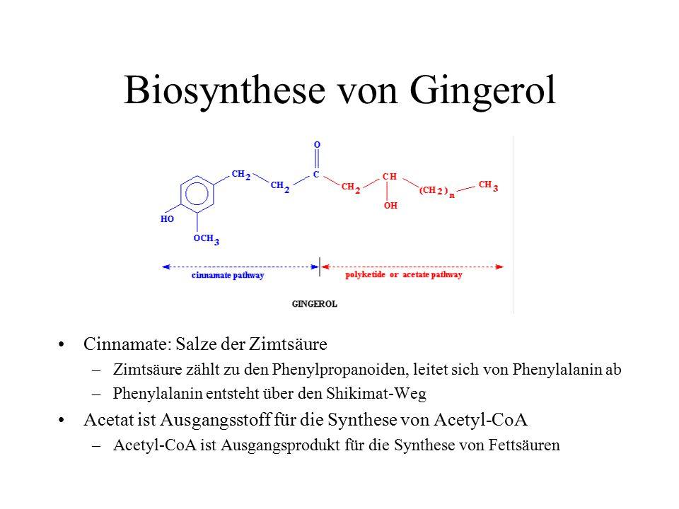 Biosynthese von Gingerol