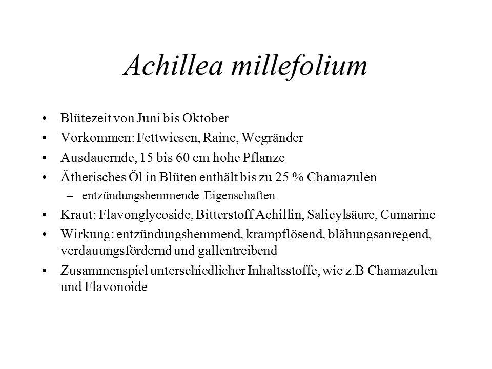Achillea millefolium Blütezeit von Juni bis Oktober