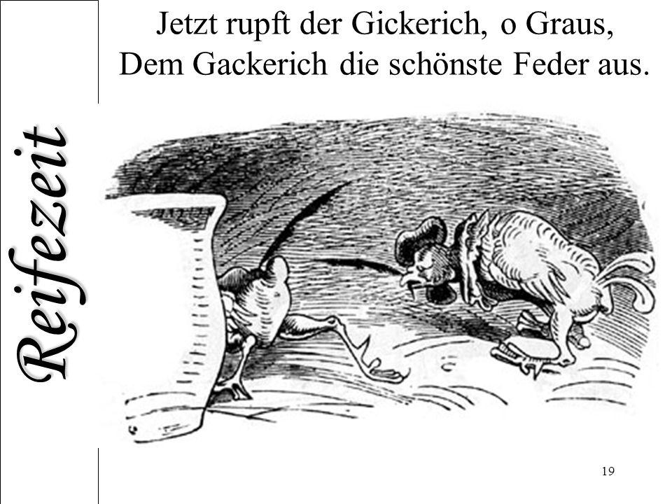 Jetzt rupft der Gickerich, o Graus, Dem Gackerich die schönste Feder aus.