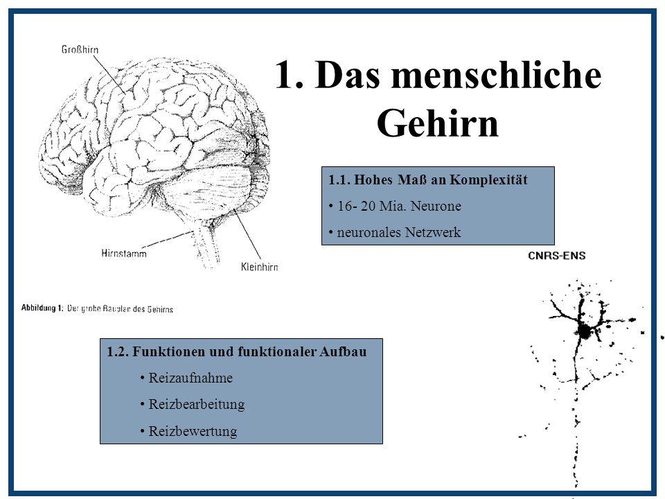 1. Das menschliche Gehirn