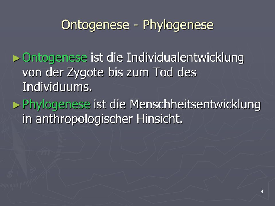 Ontogenese - Phylogenese