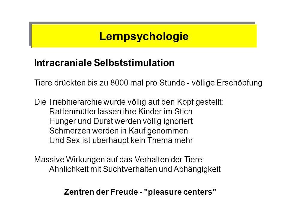 Lernpsychologie Intracraniale Selbststimulation