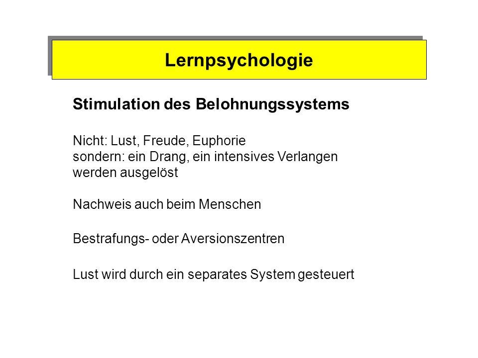 Lernpsychologie Stimulation des Belohnungssystems