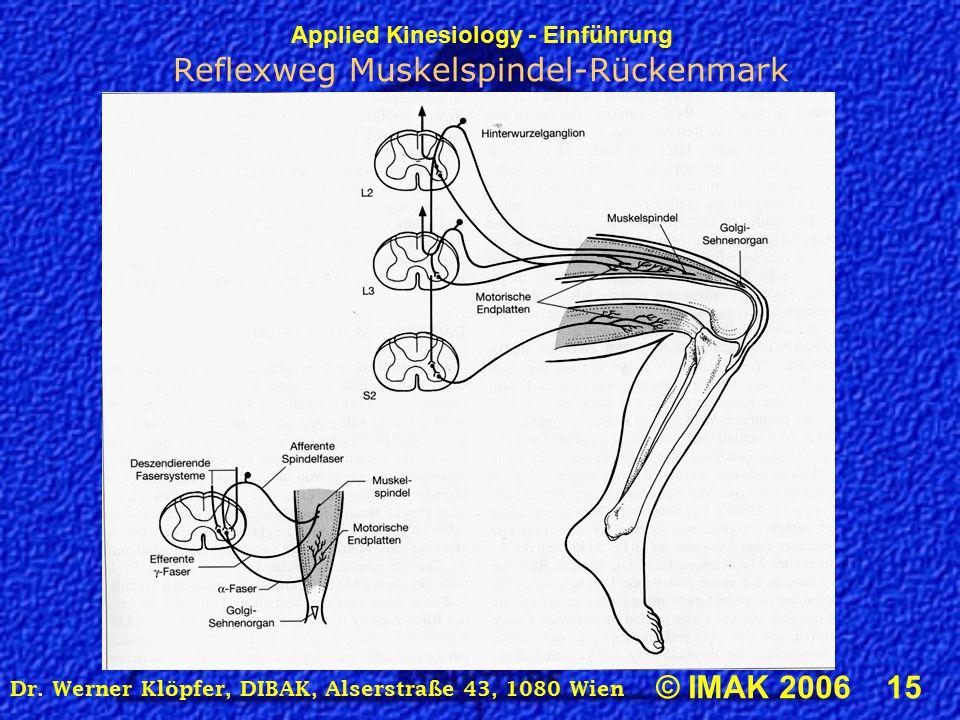 Reflexweg Muskelspindel-Rückenmark
