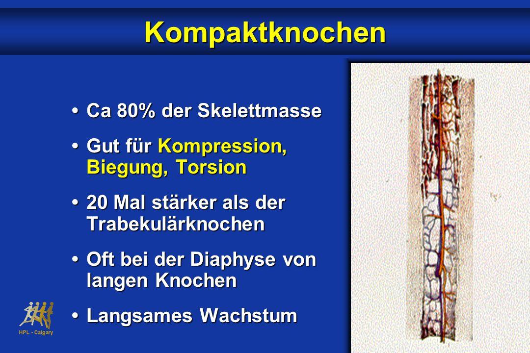 Kompaktknochen • Ca 80% der Skelettmasse