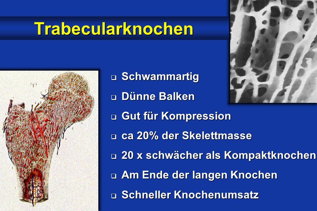 Trabecularknochen Schwammartig Dünne Balken Gut für Kompression