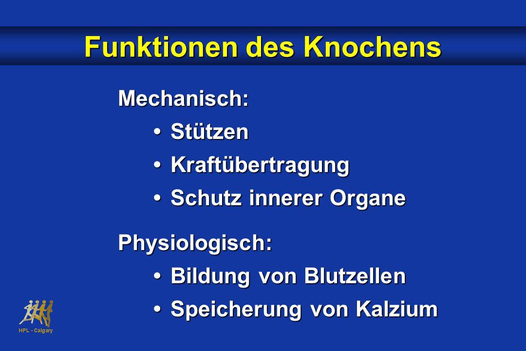 Funktionen des Knochens