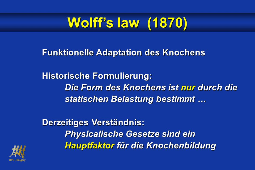 Wolff's law (1870) Funktionelle Adaptation des Knochens