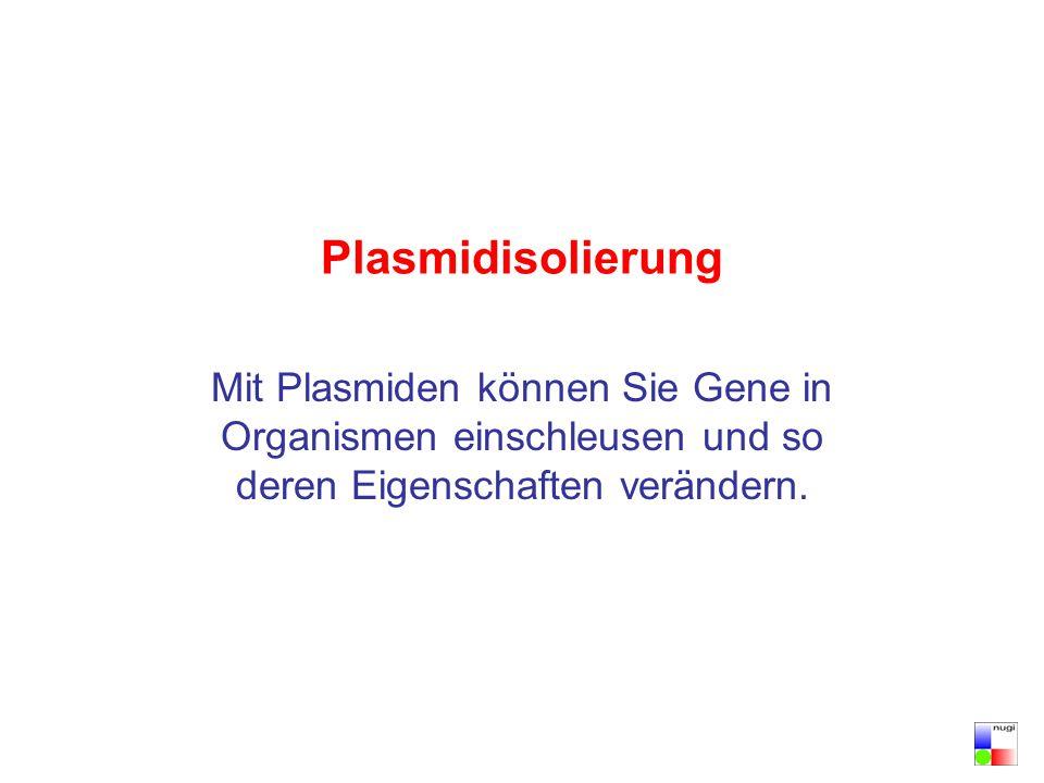 Plasmidisolierung Mit Plasmiden können Sie Gene in Organismen einschleusen und so deren Eigenschaften verändern.