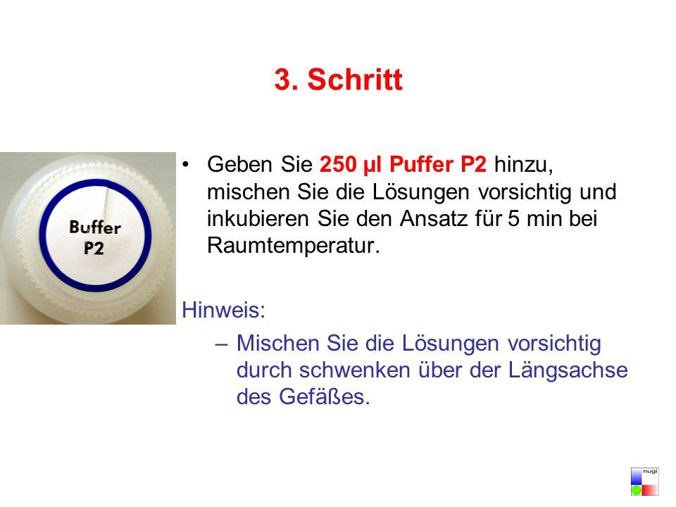 3. Schritt Geben Sie 250 µl Puffer P2 hinzu, mischen Sie die Lösungen vorsichtig und inkubieren Sie den Ansatz für 5 min bei Raumtemperatur.