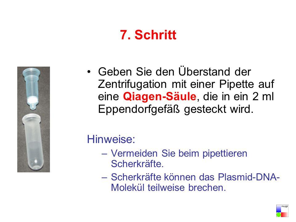 7. Schritt Geben Sie den Überstand der Zentrifugation mit einer Pipette auf eine Qiagen-Säule, die in ein 2 ml Eppendorfgefäß gesteckt wird.