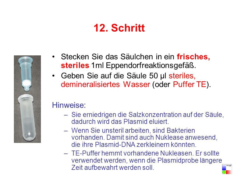 12. Schritt Stecken Sie das Säulchen in ein frisches, steriles 1ml Eppendorfreaktionsgefäß.