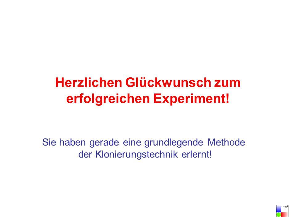 Herzlichen Glückwunsch zum erfolgreichen Experiment!